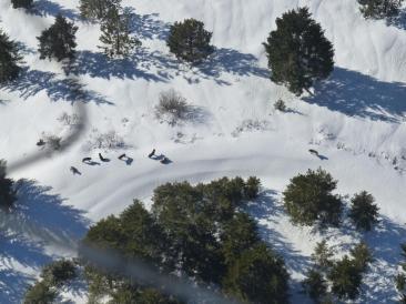 The Carpenter Ridge Pack. WDFW Image